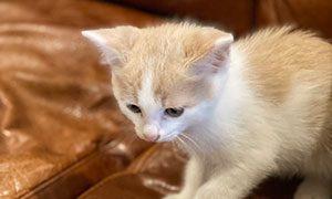 リノベ女子の猫
