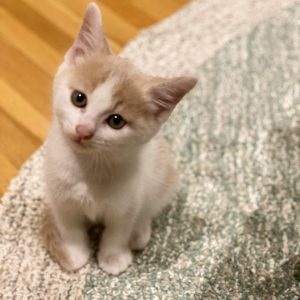 リノベ女子の愛猫